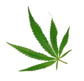 Ganja bukan Narkotika